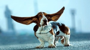 7 razones para no cortar la cola y las orejas a los perros